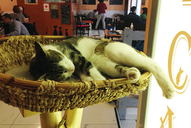 cat cafe budapeşte