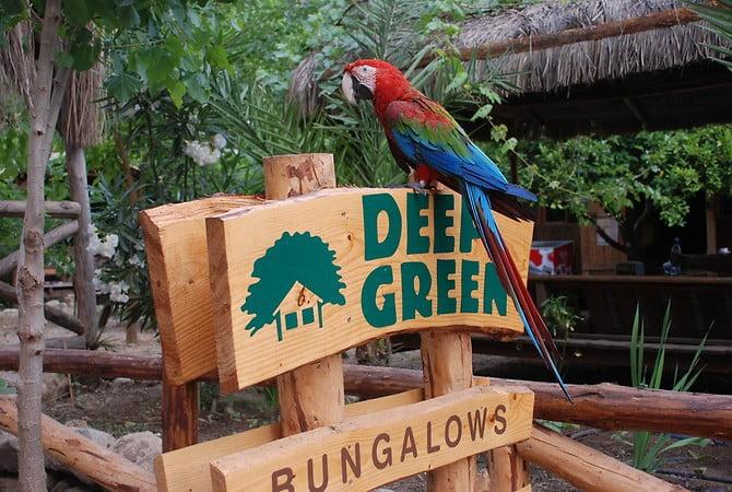 deep-green-bungalows